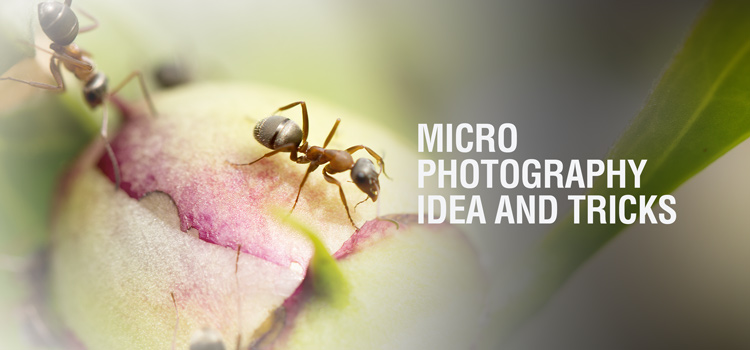 Macro Photography Ideas, Hacks & Tricks