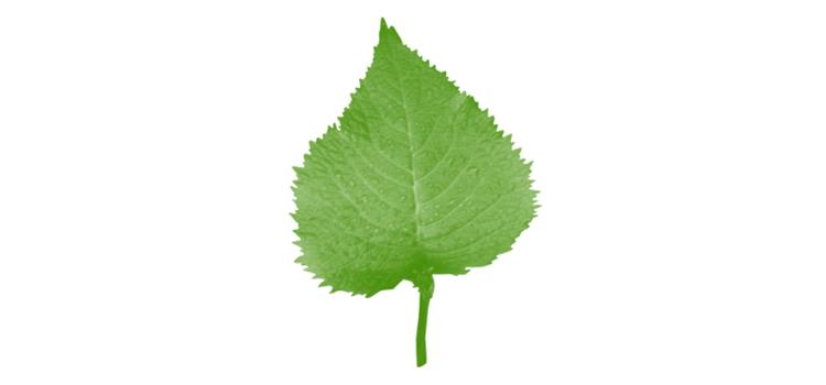 Leaf_brushe